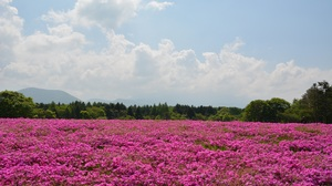 Cloud Flower Landscape Meadow Nature Pink Flower 2992x2000 Wallpaper