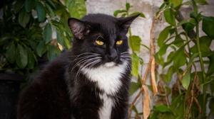 Cat Pet 3840x2160 Wallpaper