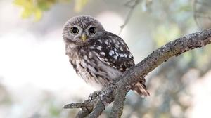 Bird Owl Wildlife 2048x1363 Wallpaper