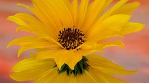 Flower Reflection 2000x1333 wallpaper
