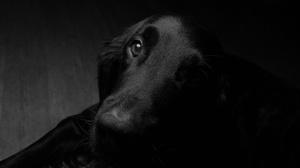 Pet Shadow Muzzle Stare 4219x2813 Wallpaper