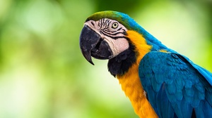 Bird Blue And Yellow Macaw Macaw Parrot Wildlife 2000x1333 wallpaper
