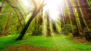 Forest Greenery Nature Sunbeam Tree 2048x1367 Wallpaper