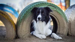 Dog Pet 3750x2500 Wallpaper