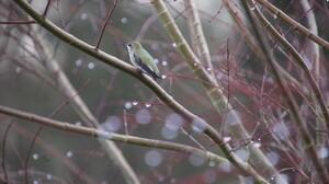 Nature Animals Birds Trees Winter Branch Rain Bokeh 2048x1365 wallpaper