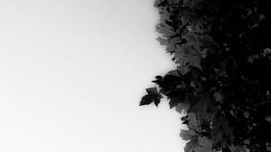 Dark Leaf 5184x3456 wallpaper