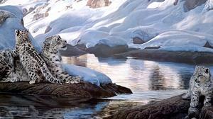 Cub Winter 4500x2147 Wallpaper