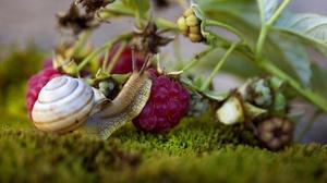Berry Macro Moss Raspberry Snail 2000x1212 Wallpaper