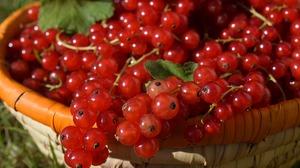 Berry Currants 6000x4000 Wallpaper