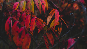 Fall Leaves Dark Red Black Nature Trees 5897x3317 Wallpaper