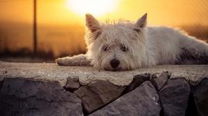 Dog Lying Down Sunset Terrier 2048x1392 wallpaper