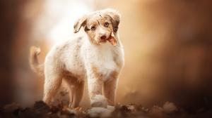 Baby Animal Dog Fall Pet Puppy 2048x1366 Wallpaper