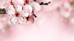 Nature Branch Blossoms 6000x5833 Wallpaper