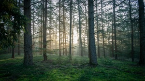 Nature Outdoors Sunlight Forest Trees Plants 3024x1654 Wallpaper
