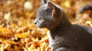 Baby Animal Cat Kitten Pet 1920x1280 Wallpaper