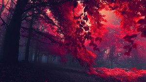 Dark Red Nature Forest Trees Red Leaves Mist Fall Landscape Leaves Plants Fallen Leaves 1920x1080 Wallpaper