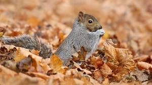 Fall Leaf Rodent Squirrel Wildlife 3840x2160 Wallpaper