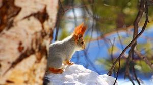 Rodent Squirrel Wildlife Winter 1920x1280 Wallpaper
