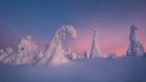 Nature Snow Spruce Sunset Winter 1920x1080 Wallpaper