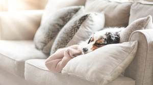Dog Pet Sleeping Sofa 5120x3418 Wallpaper