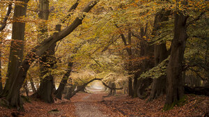 Tree Nature Fall Forest 2048x1152 wallpaper