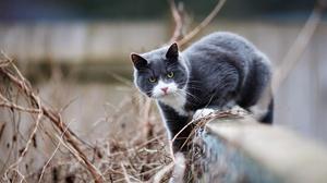Cat Depth Of Field Pet 3830x2553 wallpaper