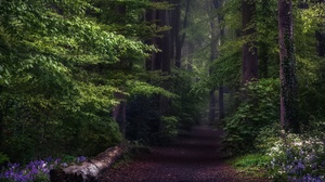 Forest Greenery Nature Path 2048x1367 Wallpaper