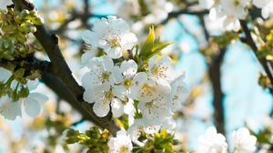 Flower Spring White Flower 3840x2400 wallpaper