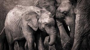 Baby Animal Elephant Wildlife 2560x1707 Wallpaper