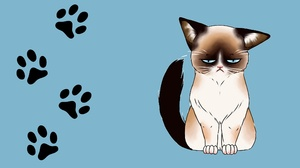 Animal Cat 2286x1284 Wallpaper