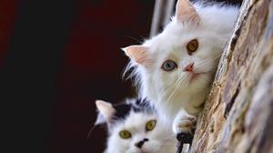 Cat Pet 2560x1700 wallpaper
