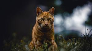 Animal Cat 4500x3000 Wallpaper