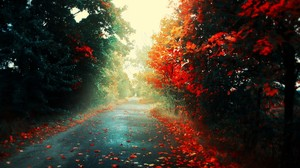 Red Leaves Road Forest Landscape Fall Trees 2560x1600 Wallpaper