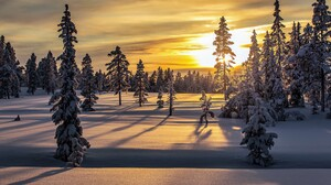 Forest Snow Sunrise Winter 3000x2000 wallpaper