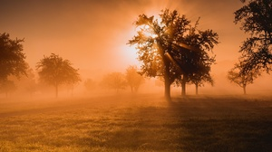 Grass Nature Sunbeam Sunset Tree 2048x1367 wallpaper
