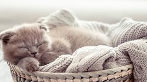 Kitten Baby Animal Sleeping Pet 5351x2545 Wallpaper