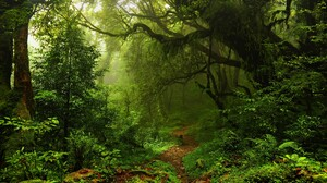 Forest Greenery Path Sunshine 3840x2160 wallpaper