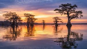 Nature Reflection Sunrise Tree 2000x1334 Wallpaper