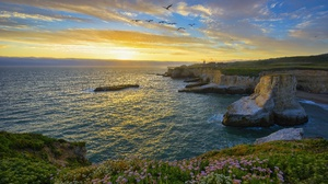 Bird California Coastline Flower Ocean Rock Santa Cruz Sunset Usa 4096x2734 Wallpaper