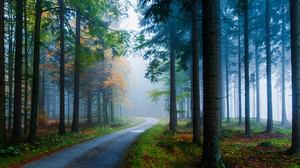 Nature Forest Road Fall Tree Foliage Fog 2048x1370 Wallpaper