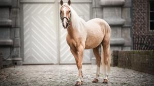 Animal Horse 2500x1664 Wallpaper