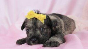 Dog Puppy Pet Baby Animal 1920x1280 Wallpaper