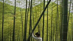 Earth Bamboo 1600x1200 Wallpaper
