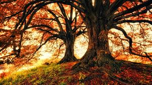 Fall Foliage Oak 3840x2372 Wallpaper