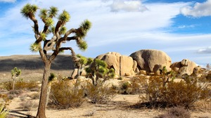 California Desert Joshua Tree National Park Rock Usa 5184x3456 wallpaper