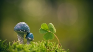 Blur Clover Green Macro Moss Mushroom Nature 2048x1401 Wallpaper