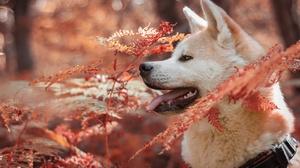 Dog Fall Fern Pet Shiba Inu 2880x1907 Wallpaper