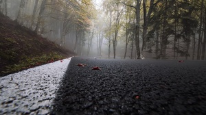Fog Forest Nature Road Tree 2048x1365 Wallpaper